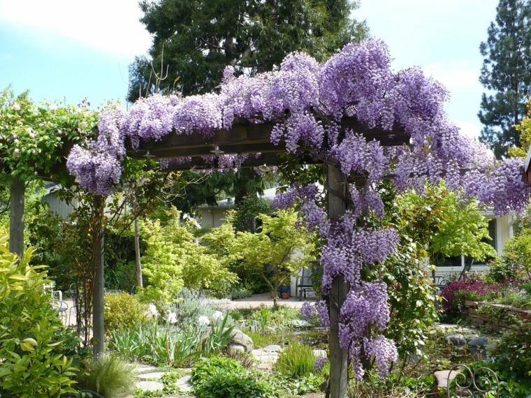 Pérgola de jardín envuelta por la planta Glicina