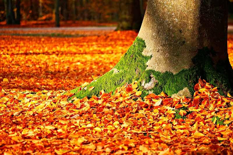limpieza hojas soplador